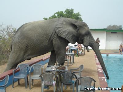 elephant_drinking_w1